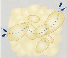 水蒸気を吸着せず拡散を可能にする疎水性フォーム